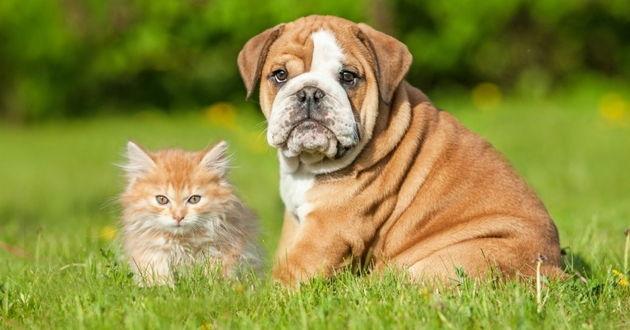 L'intérêt d'assurer les animaux de compagnie